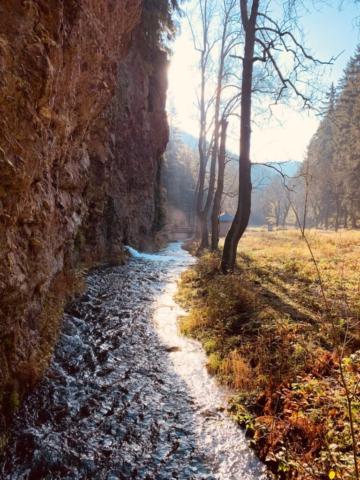 romantischer Wasserlauf im Wald